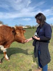 A picture of myself, Kelly Hunt, one of the rangers at Hengistbury and her manager, with Kevin, one of our sweetest steers